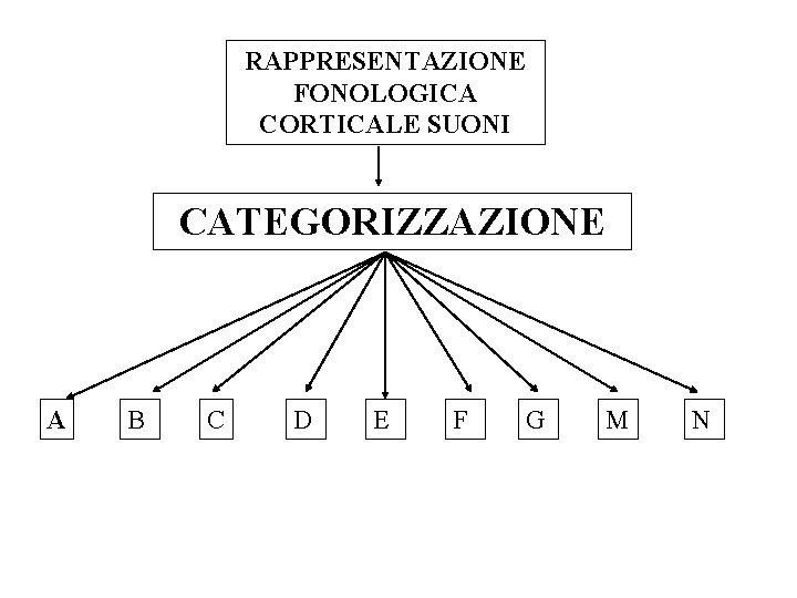 RAPPRESENTAZIONE FONOLOGICA CORTICALE SUONI CATEGORIZZAZIONE A B C D E F G M N