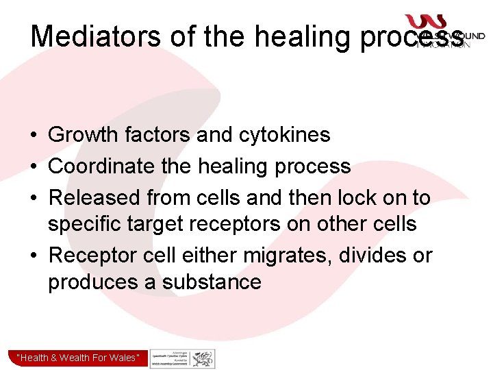 Mediators of the healing process • Growth factors and cytokines • Coordinate the healing
