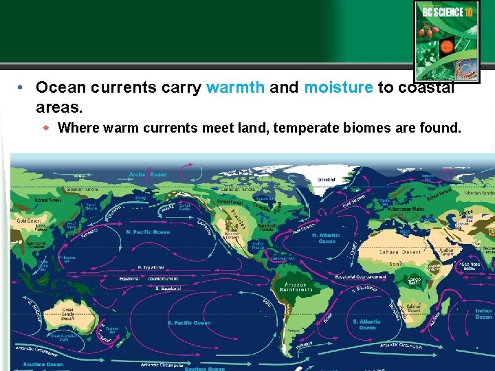 • Ocean currents carry warmth and moisture to coastal areas. w Where warm