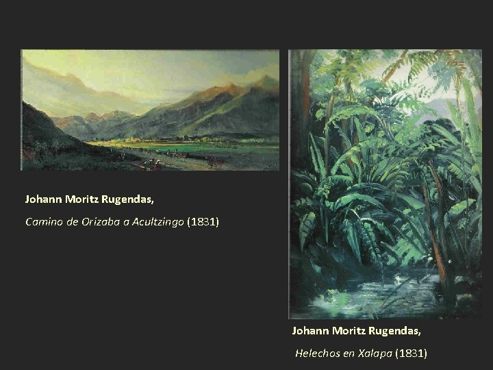 Johann Moritz Rugendas, Camino de Orizaba a Acultzingo (1831) Johann Moritz Rugendas, Helechos en