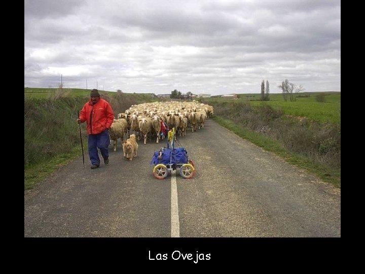 Las Ovejas