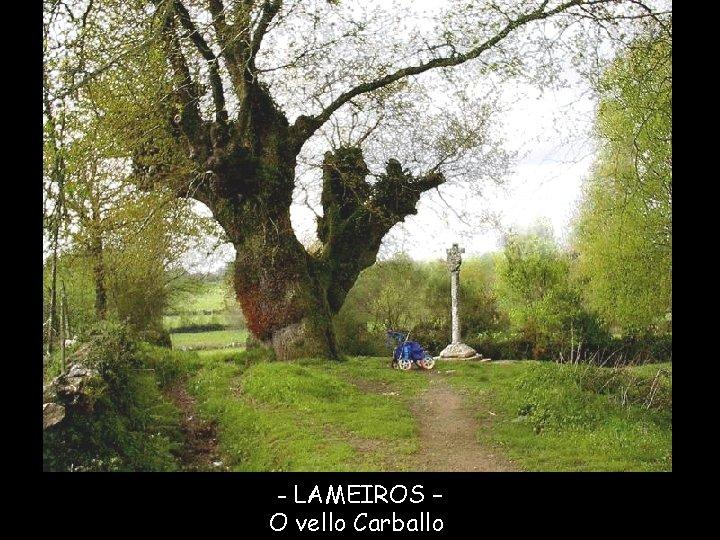- LAMEIROS – O vello Carballo