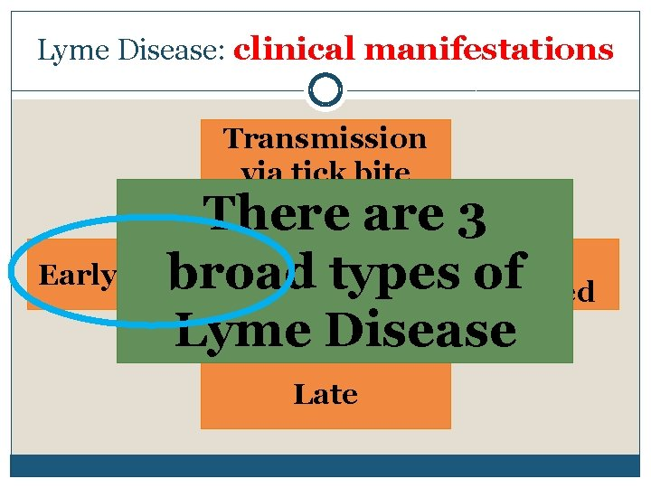 Lyme Disease: clinical manifestations Transmission via tick bite There are 3 Early Localized broad