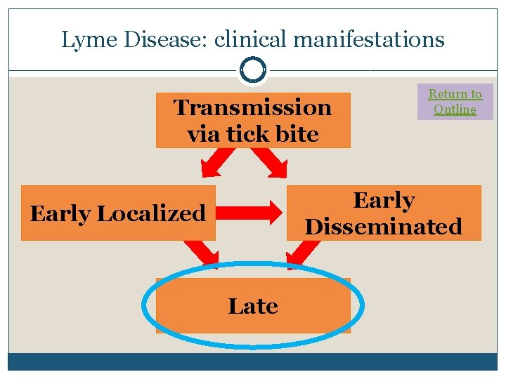Lyme Disease: clinical manifestations Transmission via tick bite Return to Outline Early Disseminated Early