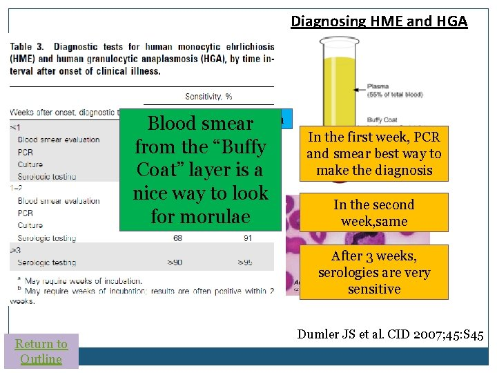 """Diagnosing HME and HGA Ehrlichia Anaplasma Blood smear from the """"Buffy Coat"""" layer is"""
