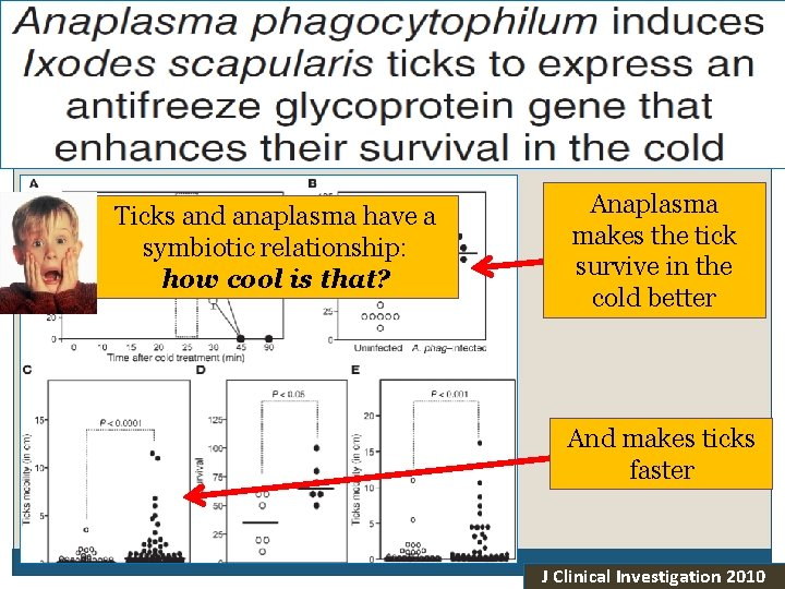 Thoughts on Evolution Ticks and anaplasma have a symbiotic relationship: how cool is that?