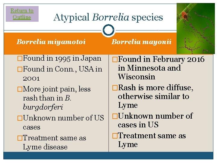 Return to Outline Atypical Borrelia species Borrelia miyamotoi Borrelia mayonii �Found in 1995 in