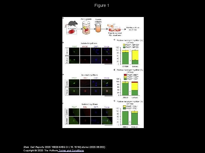 Figure 1 Stem Cell Reports 2020 15926 -940 DOI: (10. 1016/j. stemcr. 2020. 08.