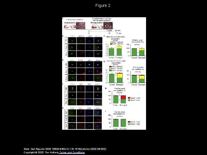 Figure 2 Stem Cell Reports 2020 15926 -940 DOI: (10. 1016/j. stemcr. 2020. 08.