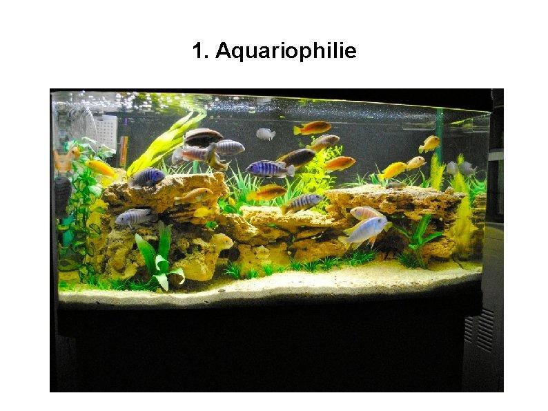 1. Aquariophilie