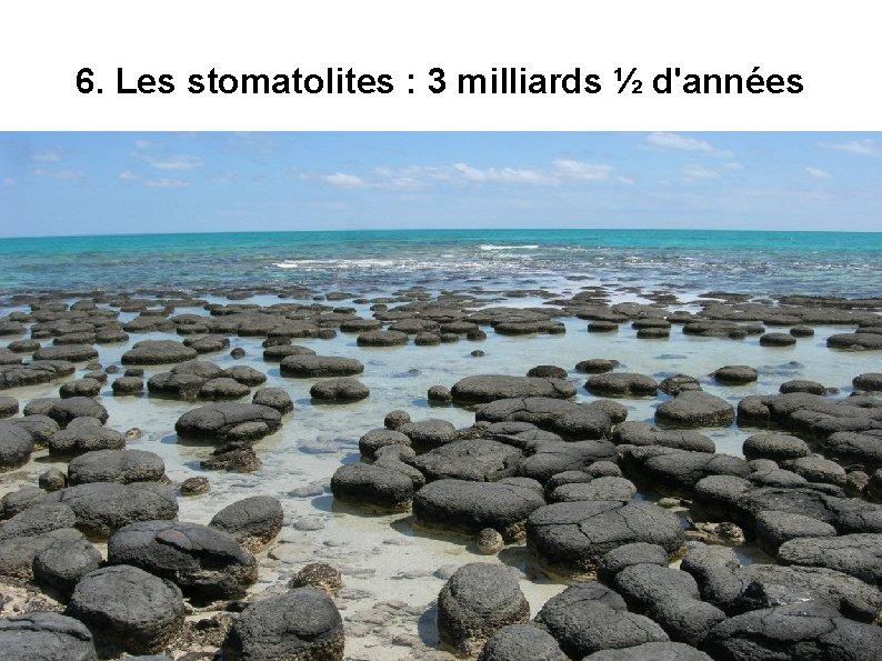 6. Les stomatolites : 3 milliards ½ d'années