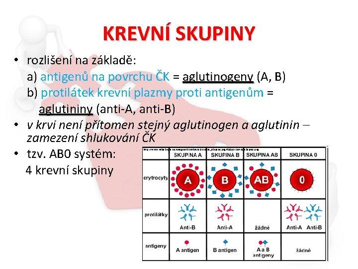 KREVNÍ SKUPINY • rozlišení na základě: a) antigenů na povrchu ČK = aglutinogeny (A,