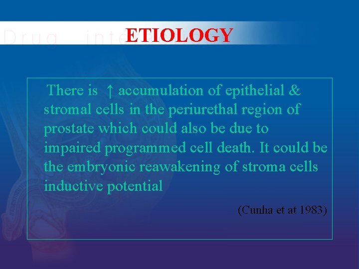 ETIOLOGY There is ↑ accumulation of epithelial & stromal cells in the periurethal region