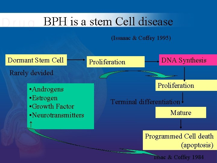BPH is a stem Cell disease (Issaaac & Coffey 1995) Dormant Stem Cell Proliferation