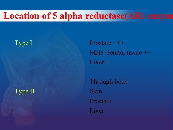 Location of 5 alpha reductase(AR) enzym Type II Prostate +++ Male Genital tissue ++