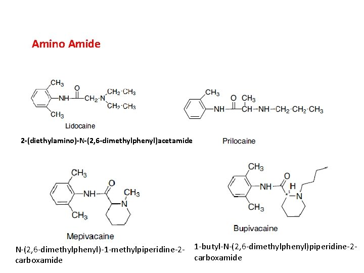 Amino Amide 2 -(diethylamino)-N-(2, 6 -dimethylphenyl)acetamide N-(2, 6 -dimethylphenyl)-1 -methylpiperidine-2 carboxamide 1 -butyl-N-(2, 6