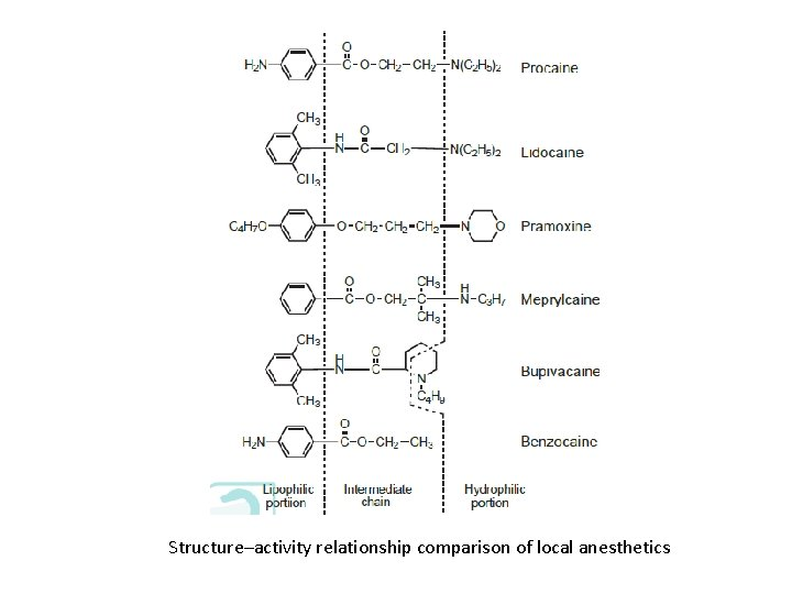 Structure–activity relationship comparison of local anesthetics