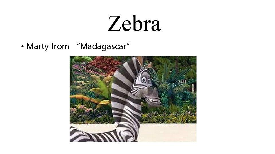 "Zebra • Marty from ""Madagascar"""