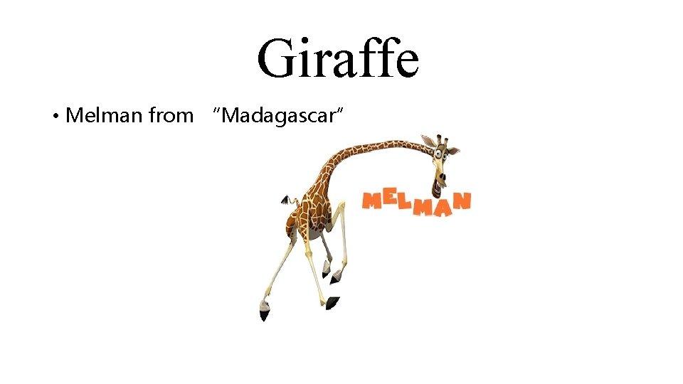 "Giraffe • Melman from ""Madagascar"""