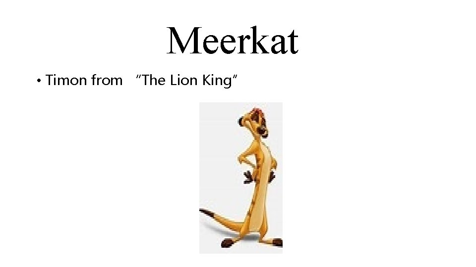 """Meerkat • Timon from """"The Lion King"""""""