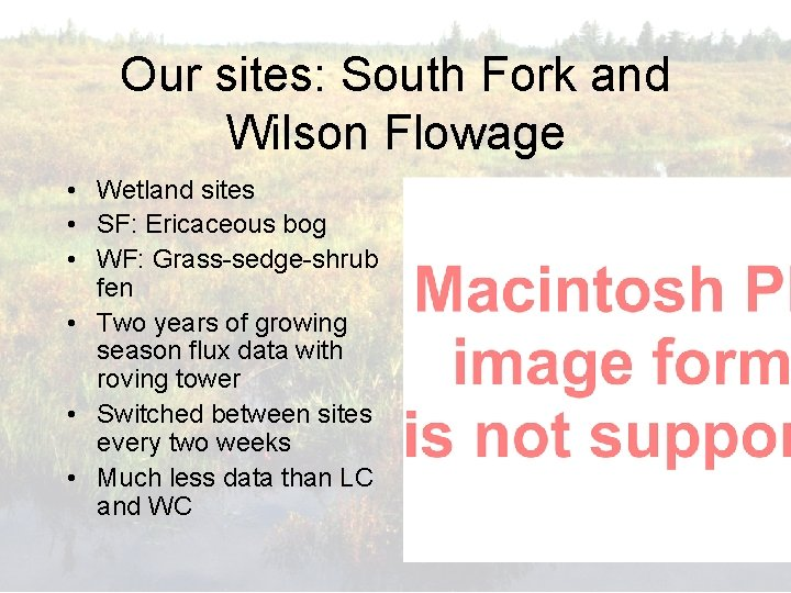 Our sites: South Fork and Wilson Flowage • Wetland sites • SF: Ericaceous bog