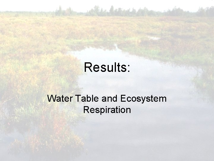Results: Water Table and Ecosystem Respiration