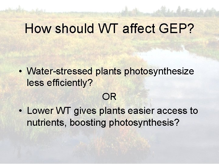 How should WT affect GEP? • Water-stressed plants photosynthesize less efficiently? OR • Lower