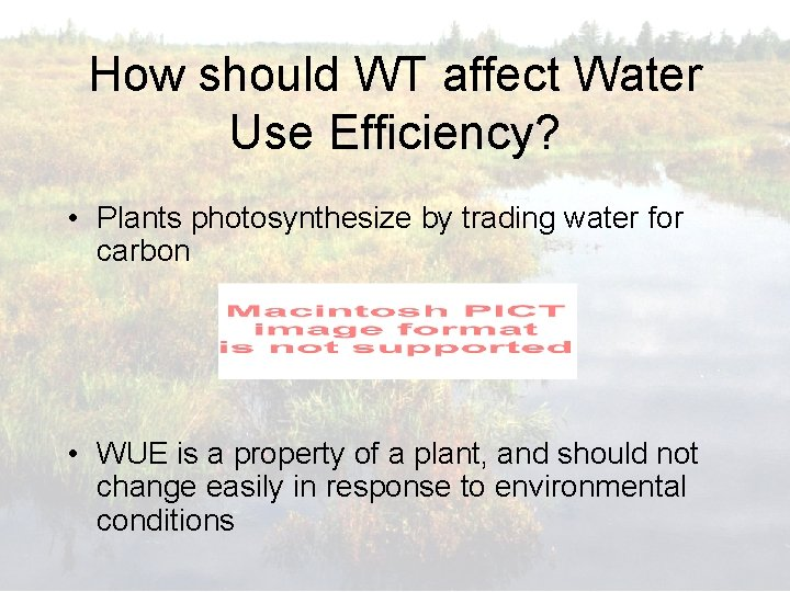 How should WT affect Water Use Efficiency? • Plants photosynthesize by trading water for