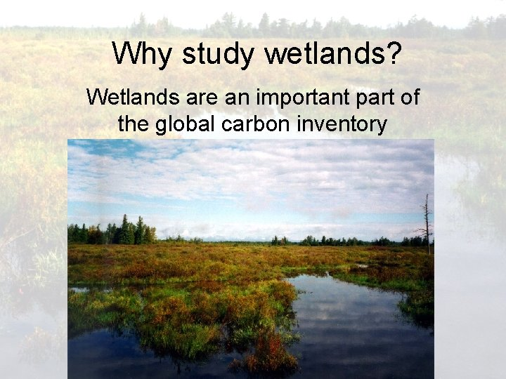 Why study wetlands? Wetlands are an important part of the global carbon inventory
