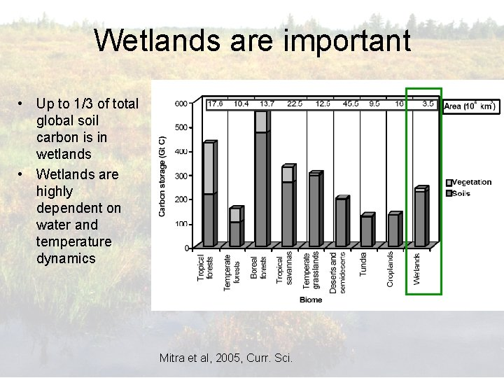 Wetlands are important • Up to 1/3 of total global soil carbon is in