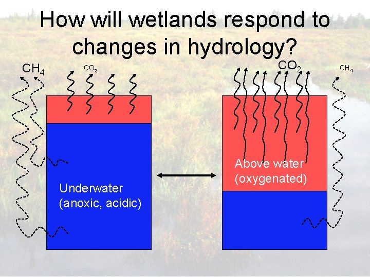 How will wetlands respond to changes in hydrology? CH 4 CO 2 Underwater (anoxic,