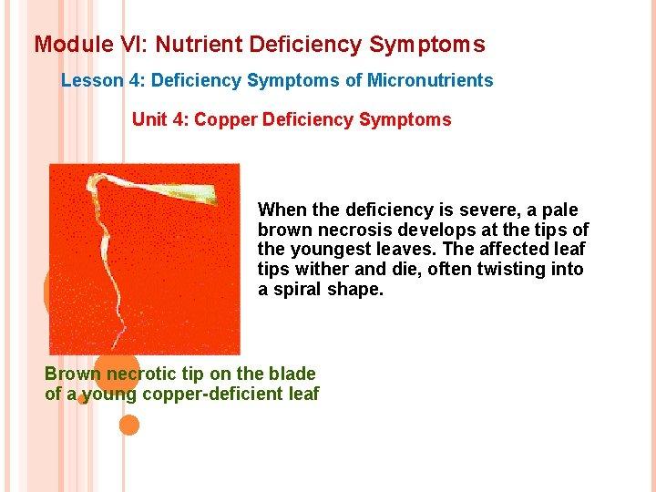 Module VI: Nutrient Deficiency Symptoms Lesson 4: Deficiency Symptoms of Micronutrients Unit 4: Copper