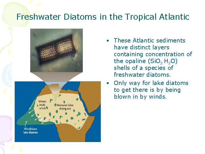 Freshwater Diatoms in the Tropical Atlantic • These Atlantic sediments have distinct layers containing