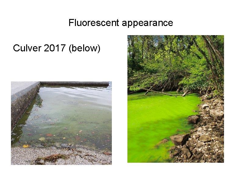 Fluorescent appearance Culver 2017 (below)