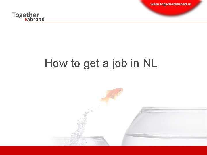 How to get a job in NL