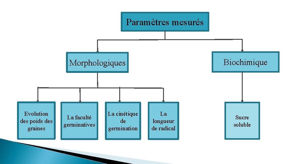 Paramètres mesurés Biochimique Morphologiques Evolution des poids des graines La faculté germinatives La cinétique