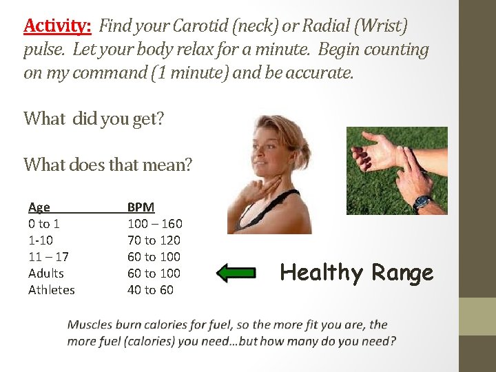 Activity: Find your Carotid (neck) or Radial (Wrist) pulse. Let your body relax for