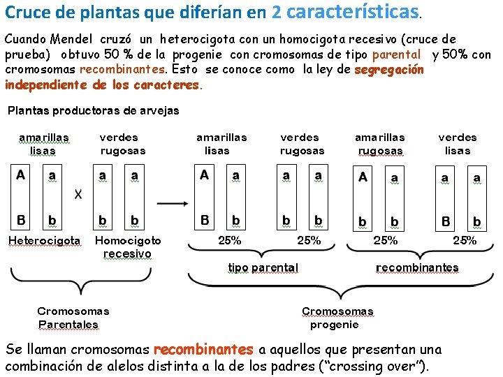 Cruce de plantas que diferían en 2 características. Cuando Mendel cruzó un heterocigota con