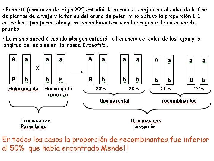 • Punnett (comienzo del siglo XX) estudió la herencia conjunta del color de