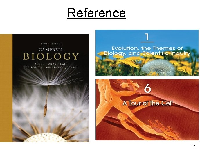 Reference 12
