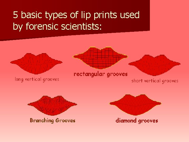 5 basic types of lip prints used by forensic scientists: