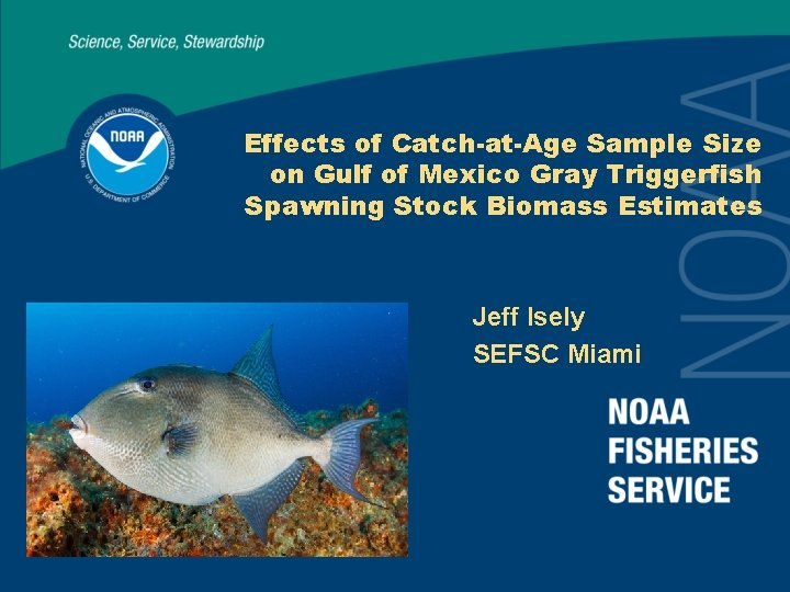 Effects of Catch-at-Age Sample Size on Gulf of Mexico Gray Triggerfish Spawning Stock Biomass