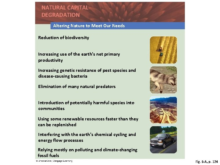 NATURAL CAPITAL DEGRADATION Altering Nature to Meet Our Needs Reduction of biodiversity Increasing use