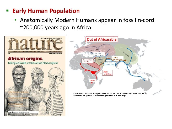§ Early Human Population • Anatomically Modern Humans appear in fossil record ~200, 000