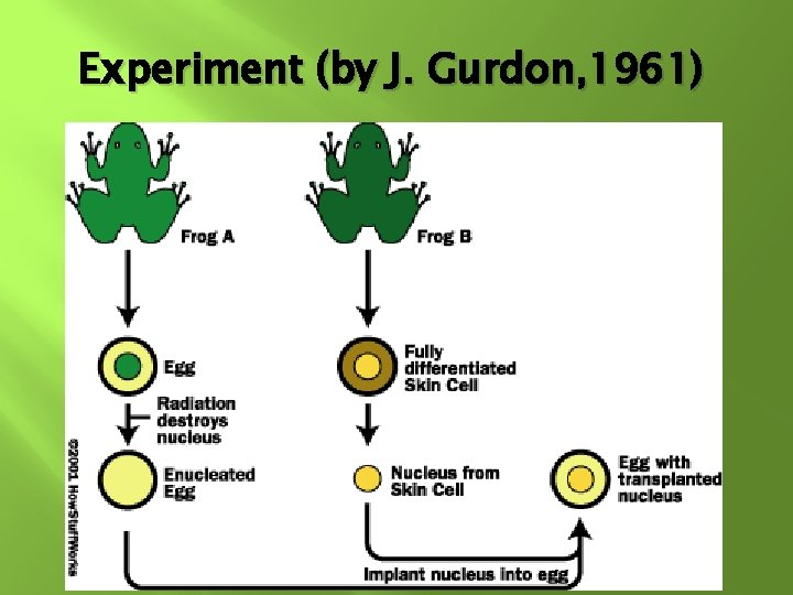 Experiment (by J. Gurdon, 1961)