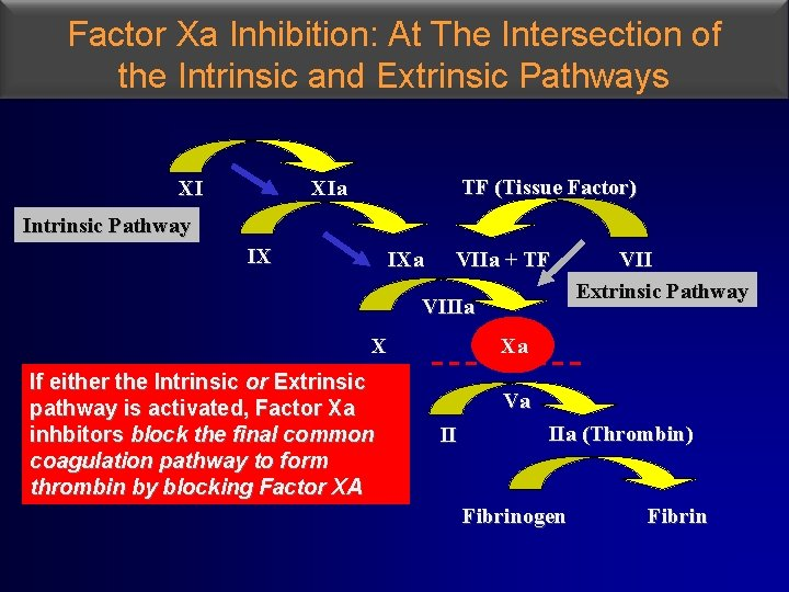 Factor Xa Inhibition: At The Intersection of the Intrinsic and Extrinsic Pathways TF (Tissue