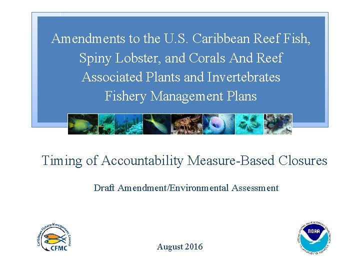 Amendments to the U. S. Caribbean Reef Fish, Spiny Lobster, and Corals And Reef