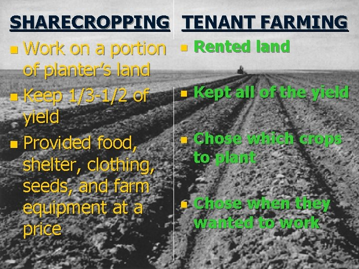 SHARECROPPING TENANT FARMING n Work on a portion n Rented land of planter's land