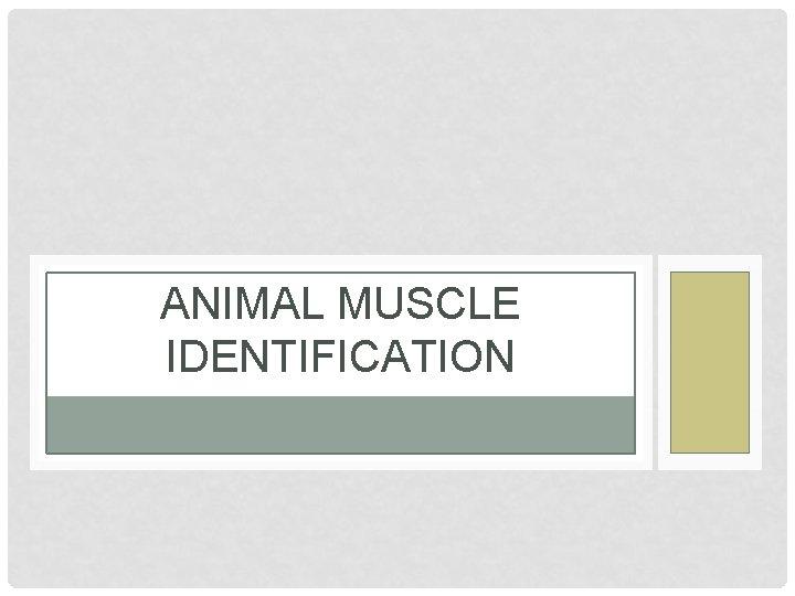 ANIMAL MUSCLE IDENTIFICATION