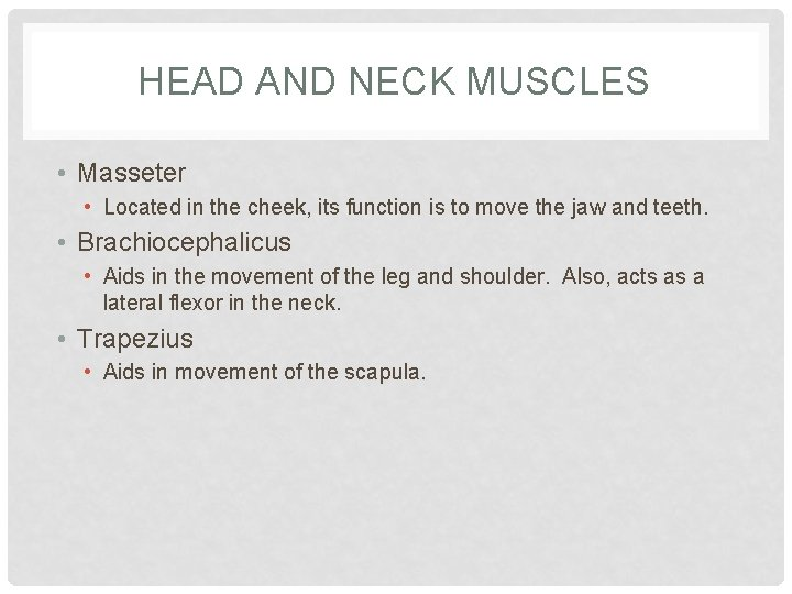 HEAD AND NECK MUSCLES • Masseter • Located in the cheek, its function is